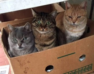 gatti-buonarroti-0001-hp