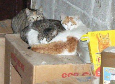 gatti scatoloni_2-ns