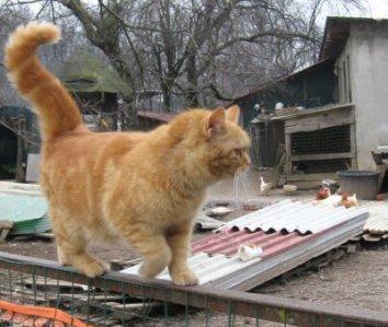 nns-gatto cancellata_8965
