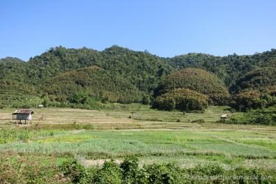 Luang Nam Tha-3