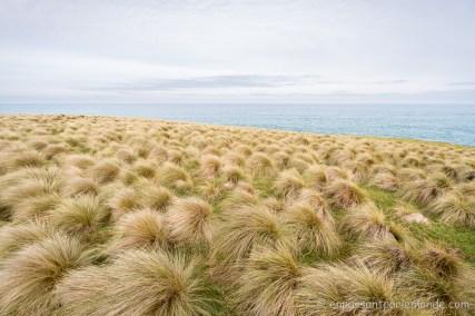 Catlins - Slope Point