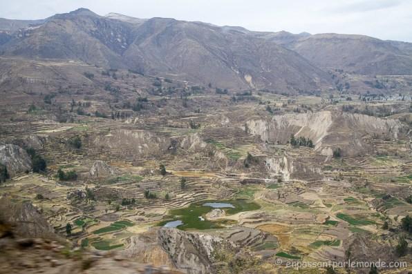 canyon-del-colca-4