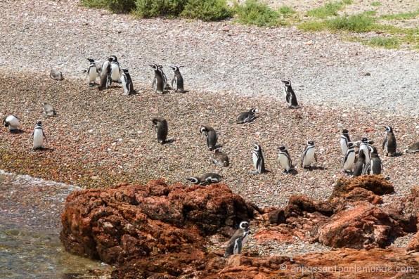 Argentine - Puerto Madryn-21