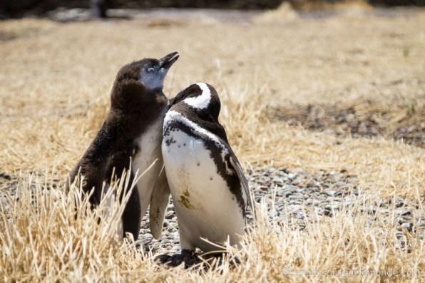 Argentine - Puerto Madryn-22