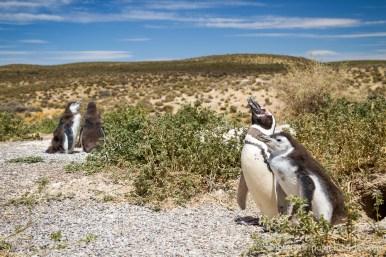 Argentine - Puerto Madryn-28