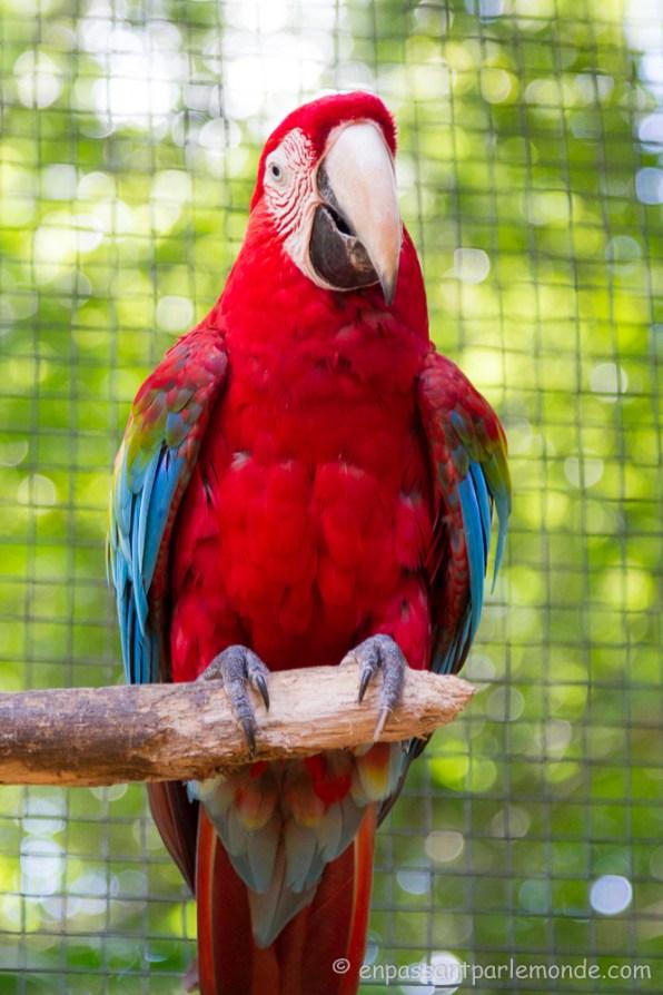 Brésil - Parque das Aves-20