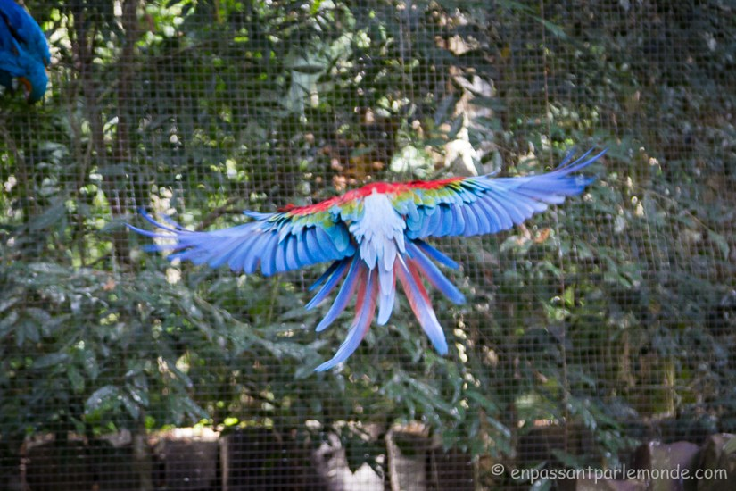 Brésil - Parque das Aves-21