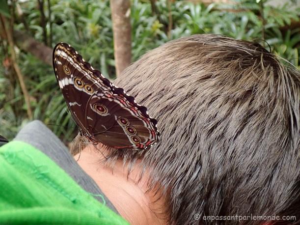 Brésil - Parque das Aves-25