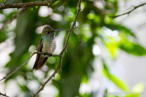 Brésil - Parque das Aves-29