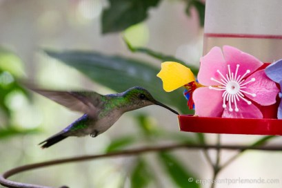 Brésil - Parque das Aves-30