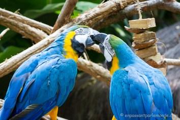Brésil - Parque das Aves-35
