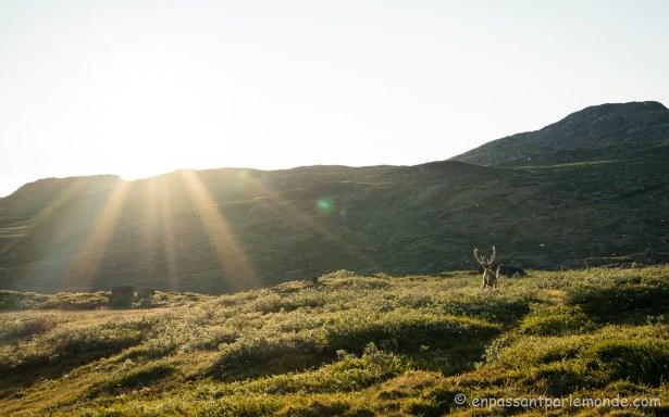 Groenland-ACT-partie-2-J4-22
