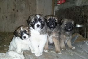 I cuccioli di febbraio