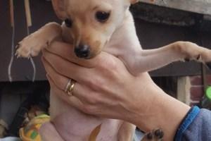 Cuccioli nati il 9 Gennaio