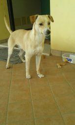 Lio (3)