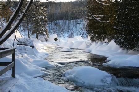 polar bears club river