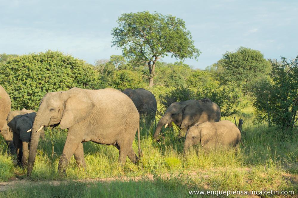 manada elefantes safari