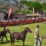 FIT Fiesta del asturcón en la Majada de Espineres. Piloña
