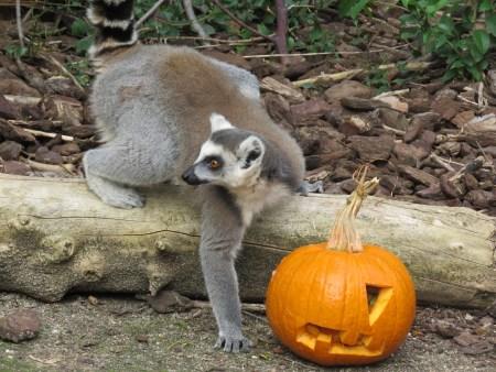 Faunia Halloween
