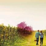fine feria del vino de valladolid