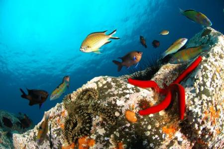 Diving_Madeira