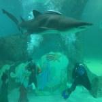 Zoo aqurium