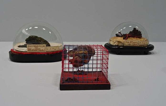 Tetsumi Kudo, Cage, ca 1978 et Injections -Corrosions sous cloches (Collections de la faculté de médecine de Montpellier) - Anatomie de l'Automate - La Panacée - 2015