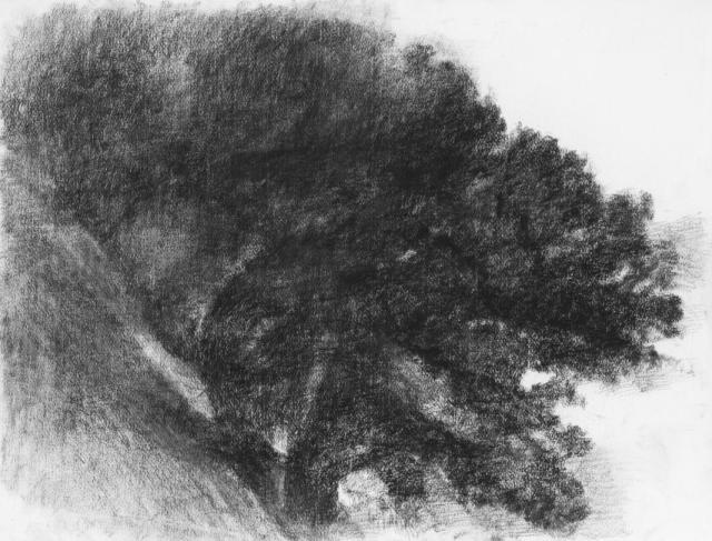 """Alexandre Hollan, """"Le Buisson tournant"""", au Bosc Viel, 2014 Fusain, H.50 x L.65 cm Collection particulière Courtesy Galerie Marie Hélène de La Forest Divonne © photo Illès Sarkantyu © ADAGP Paris 2016"""