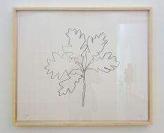 Ligne Forme Couleur - Ellsworth Kelly (1923-2015) dans les collections françaises à la Collection Lambert - Salle 04 -Chêne VII, 1992