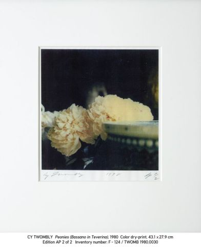 Cy Twombly, 1980.0030 Peonies (Bassano in Teverina)