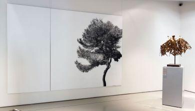 Le rêve de la fileuse - trois collections en dialogue au Musée Fabre - Belkacem Boudjellouli, Pin, 2009 et Germaine Richier, La Chauve-souris, 1946