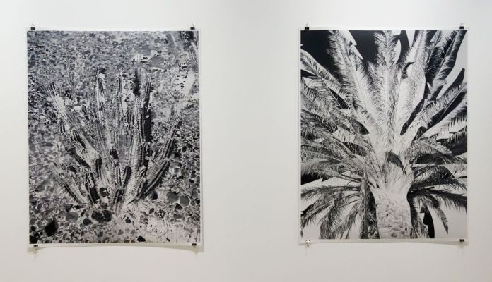 Jeremy Ayer - Cactus et Palmier, Série Sur les traces, 2017-2019 - Sur Terre - Image, technologies & monde naturel - Rencontres Arles 2019