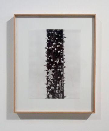 Marten Lange - Chicxulub, 2016 - Sur Terre - Image, technologies & monde naturel - Rencontres Arles 2019