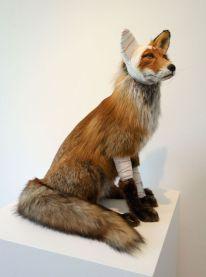 Pascal Bernier - Accident de chasse - Renard, 2018 - Bêtes de scène à la Villa Datris - Survies Animales