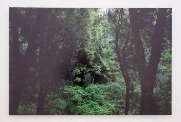 Mathieu Lucas - Ailanthus altissima, 2018 - Viva Villa 2019 - Collection Lambert