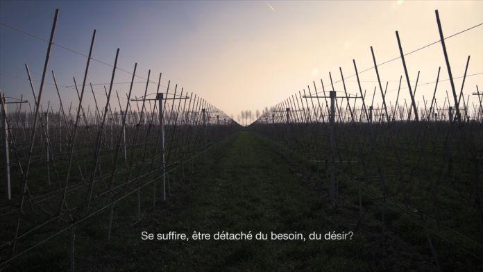 Armand Morin - Les Oiseaux, 2019 - vidéo 4k - 10 min. 41 sec © Armand Morin