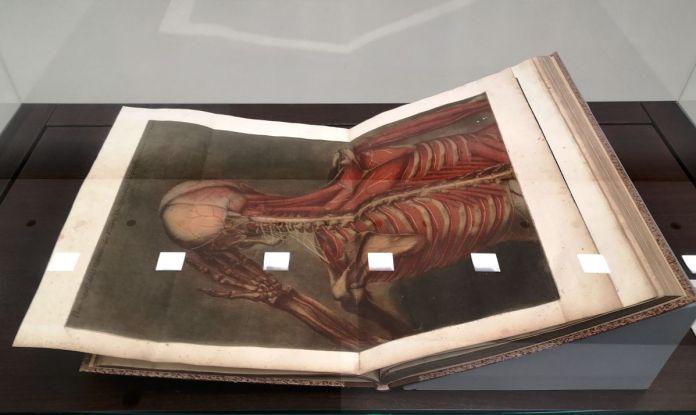 Jacques Fabien Gautier d'Agoty - Anatomie générale des viscères, et de la névrologie, angéologie et ostéologie du corps humain, 1754 - Art & Anatomie - Musée Fabre