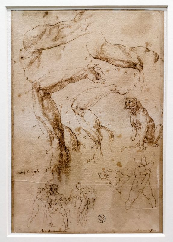 Michel-Ange (Attribué à) - Feuille d'études, 1ère moitié du 16e siècle - Art & Anatomie - Musée Fabre