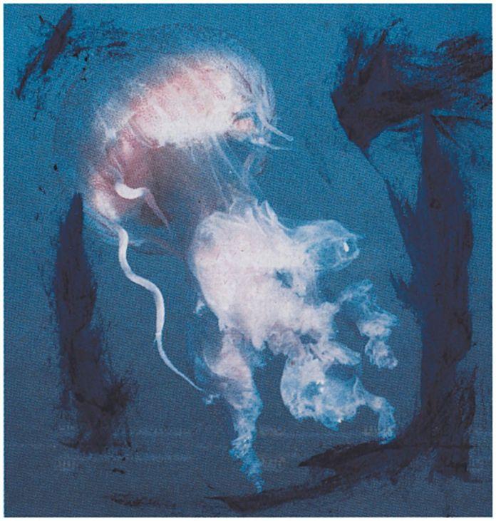 Jean-Luc Moulène, Méduse, Sérigraphie sur Arches BFK Rives 300gr, 43,5 x 45,8 cm, 2018 - Atelier Tchikebe