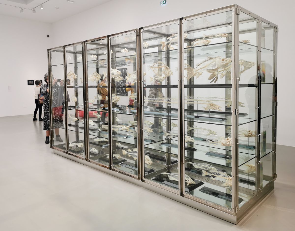 Damien Hirst - Something and Nothing, 2004 - 00s - Collection Cranford - les années 2000 au MOCO Montpellier