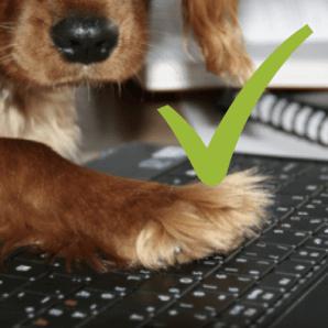 email marketing para veterinarios