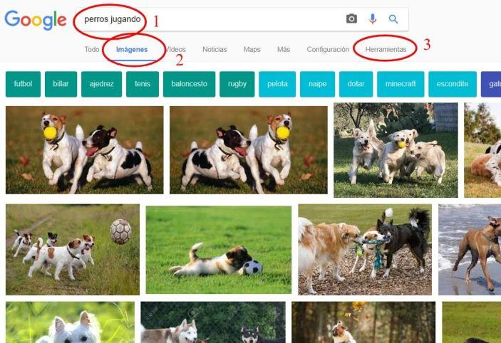 Imágenes para veterinarios