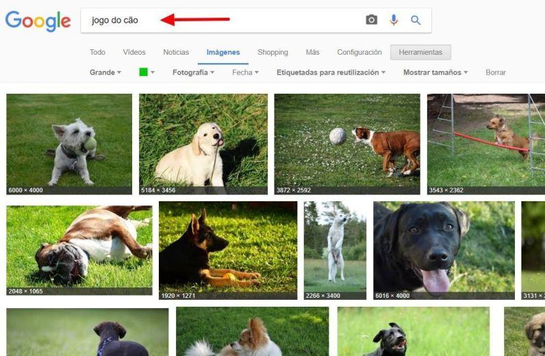 facebook para veterinarios