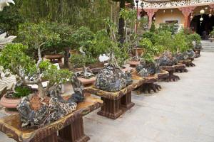bonsai al van hanh