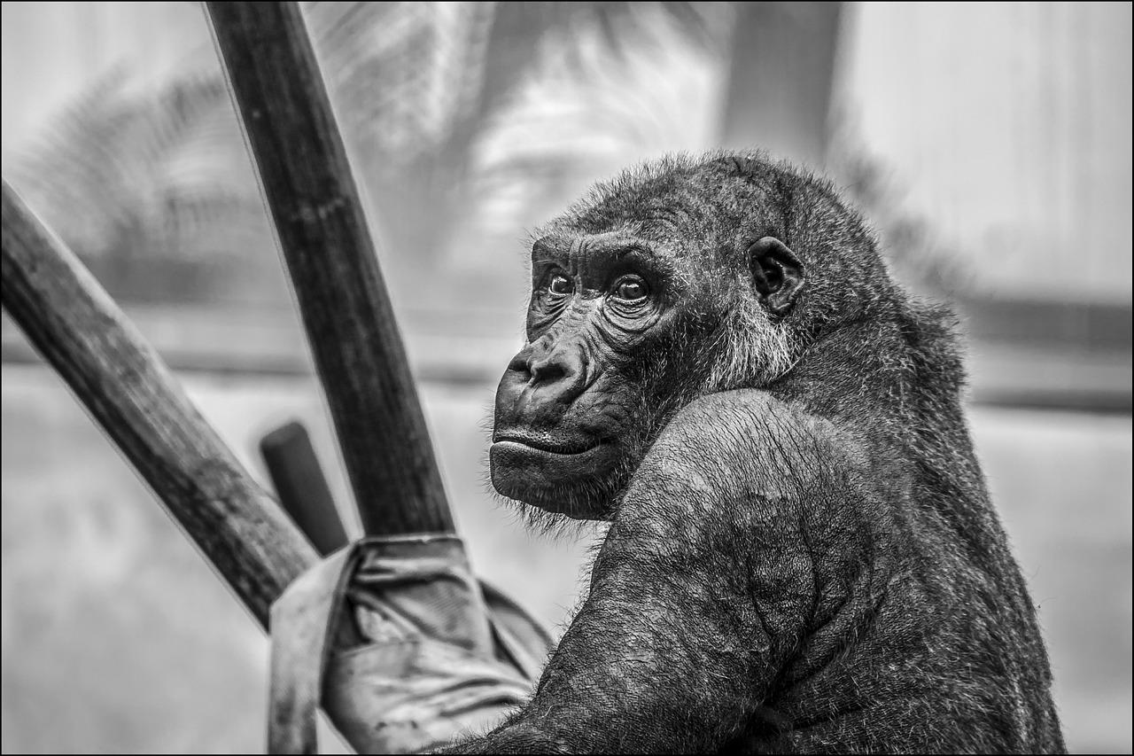 Enriquecimiento ambiental para primates
