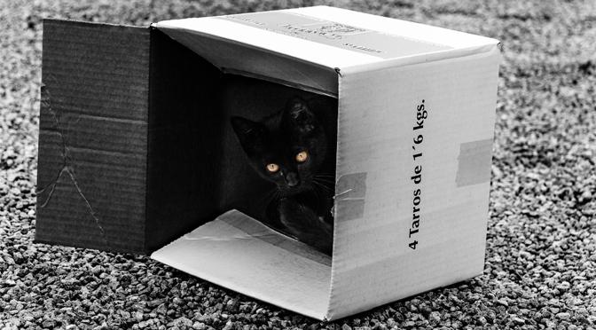 Los gatos y las cajas de cartón.