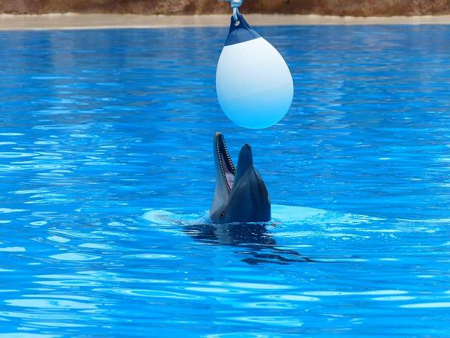Delfín mular jugando en piscina.