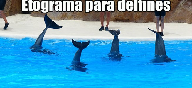 Etograma y conductas del delfín
