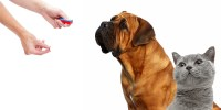 Entrena tu perro o gato mediante Clicker y Target.