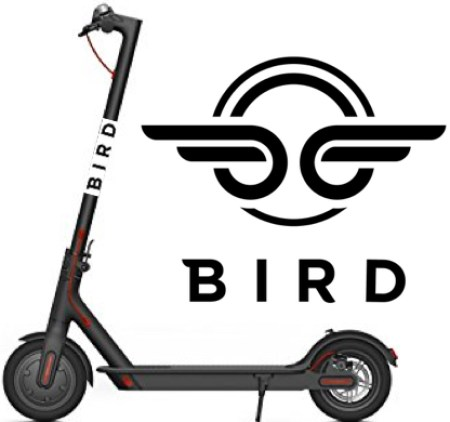 Bird scooter